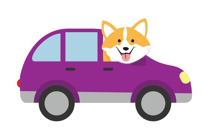 Hund i bil/båd