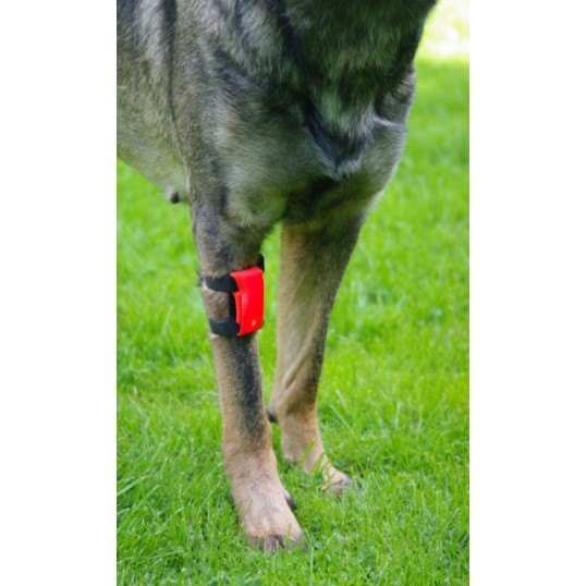 Lygte med elastikker til at sætte på f.eks. hundens ben