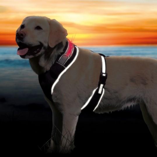 Flash Soft hundesele med flash-lysbånd.