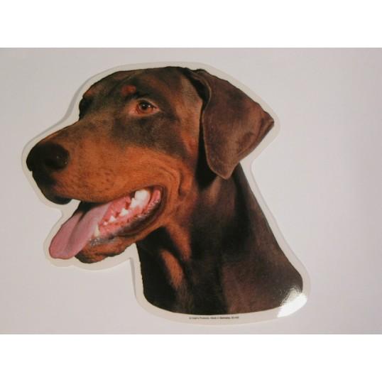 Dobermann, brun, øre ned, hv. Vælg: klistermærke, nøglering, broche, slipsenål, mm.