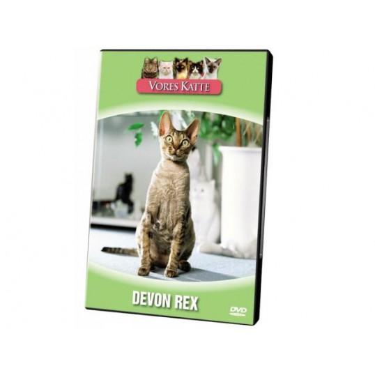 Vores Katte. Devon rex
