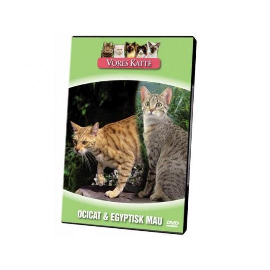 Vores Katte. Ocicat & Egyptisk Mau