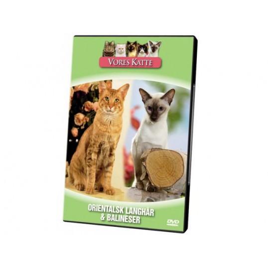 Vores Katte. Orientalsk langhår & Balineser