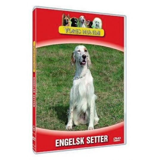 Vores hunde - Engelsk Setter