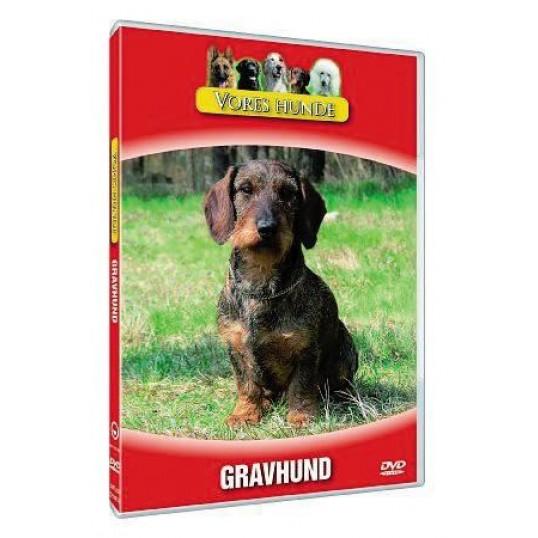 Vores hunde - Gravhund