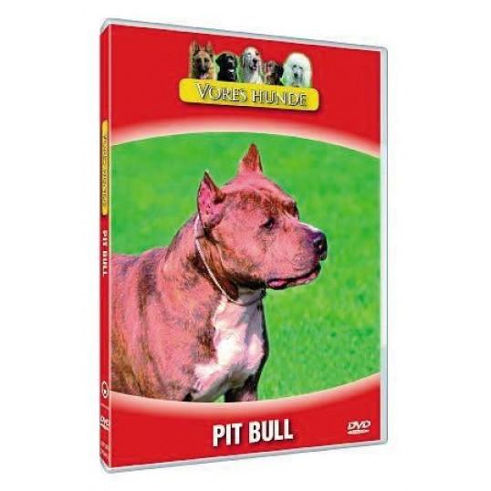 Vores hunde - Pit Bull