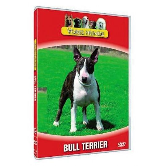 Vores hunde - Bull Terrier