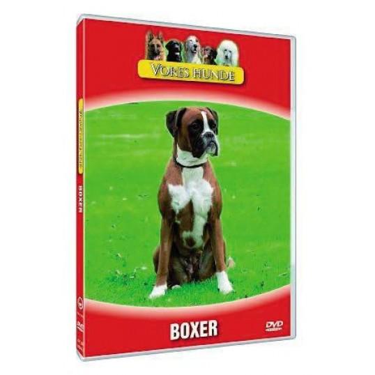 Vores hunde - Boxer