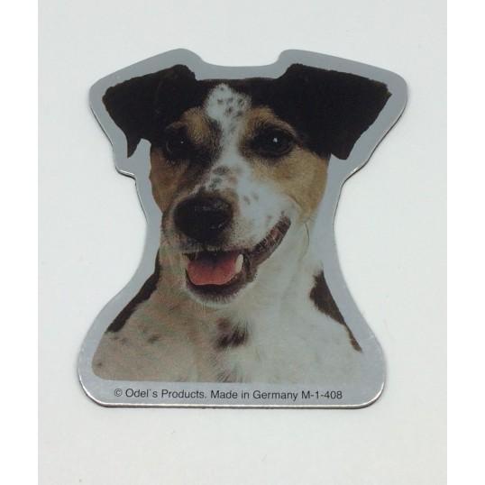 Magnet med Jack Russell Terrier