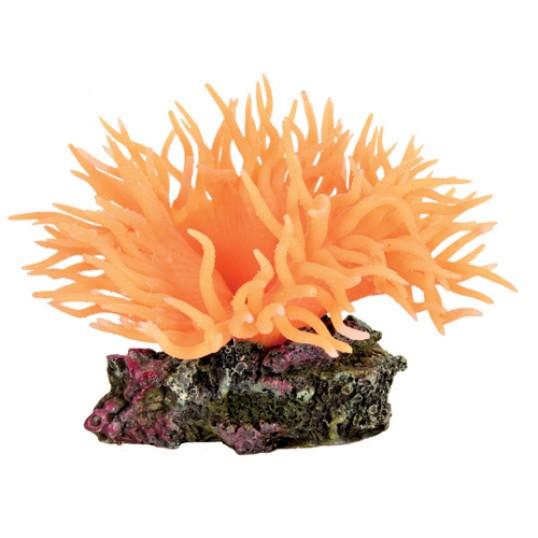 Søanemoner