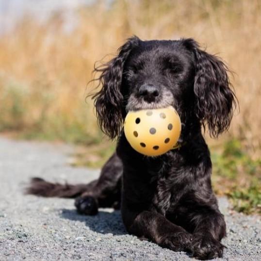 HoleyboldmklokkeVelegnettilblindehunde-01