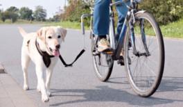 AfstandsholdertilcyklenmedaflastningsfjederOgsegnettilstorehunde-20