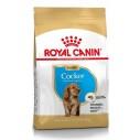 Royal Canin Cocker Junior - op til 12 måneder