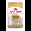 West Highland White Terrier Adult - over 10 måneder