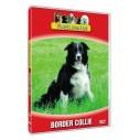 Vores hunde - Border Collie