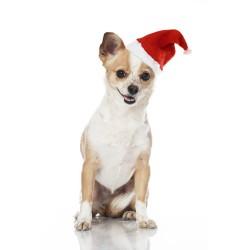Jule-Nissehue til hunden